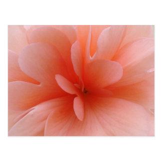 Pale Pink Begonia Gift Range Postcard