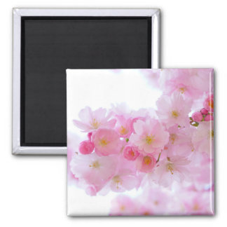 Pale Pink Cherry Blossoms Square Magnet