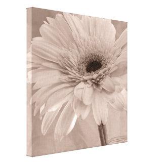 Pale Pink Gerber Daisy Flower Gallery Wrap Canvas