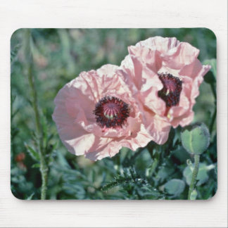 Pale Pink Poppies flowers Mouse Pad