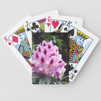 Pale pink rhododendron flower poker deck