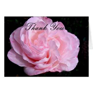 Pale Pink Rose Thank You Note Card