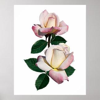 Pale Pink Rosebuds Variety Pristine Poster