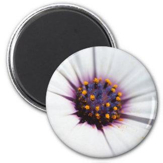 Pale Purple Daisy Magnet
