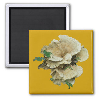 Pale Shelf Fungus Coordinating Items Square Magnet