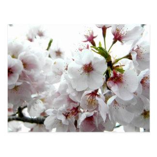 Pale Spring Postcard