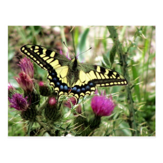 Pale Yellow and Blue Butterfly Postcard