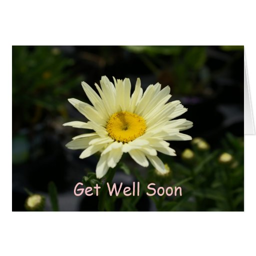 Pale Yellow Daisy, Get Well Soon Greeting Cards