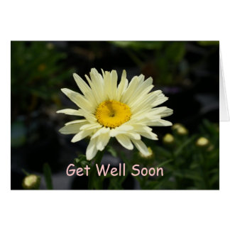 Pale Yellow Daisy, Get Well Soon Greeting Card