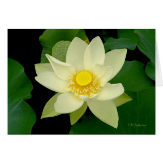 Pale yellow floating waterlily card