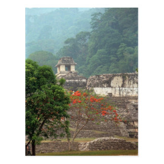 Palenque, Mexico Postcard