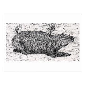 Palestinian Mole Rat Postcard