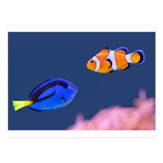 Palette surgeonfish and clown fish swimming postcard
