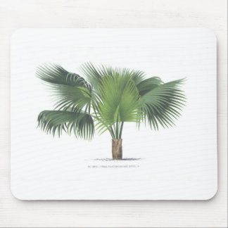 palm drawing VII Mouse Mats