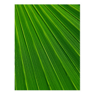 Palm Leaf Abstract Colorful Green Postcard