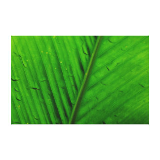 Palm Leaf Stretched Canvas Print
