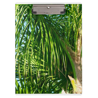 palm leaves clipboard