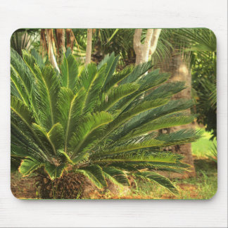 palm paradise mouse pad