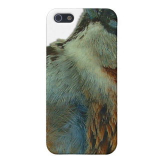 Palm Springs Bird Road Kill iPhone 5/5S Cases
