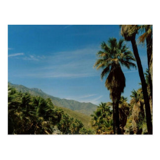 Palm Springs View Postcard