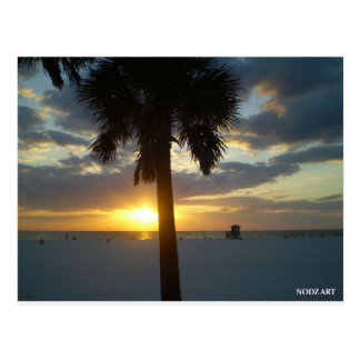 Palm Sunset Postcard