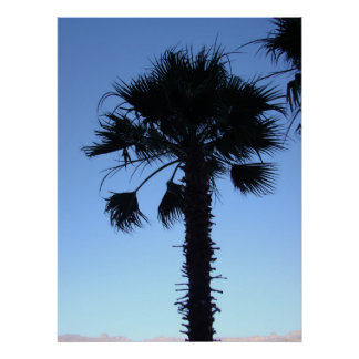Palm Tree 005 Posters