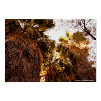 Palm Tree 19x13 Poster