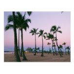 Palm Tree 2 Postcard