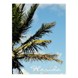 Palm tree agaist the sky in Florida Postcard