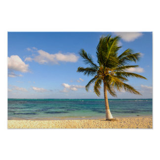 Palm Tree and Beach Poster