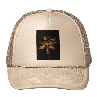 Palm tree at night hat
