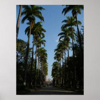 Palm Tree Boulevard Poster