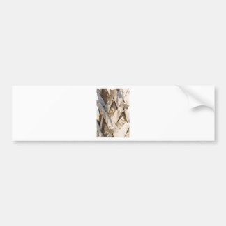 Palm Tree Close Up Detail Abstract Tight Crop Bumper Sticker