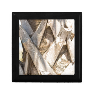 Palm Tree Close Up Detail Abstract Tight Crop Small Square Gift Box