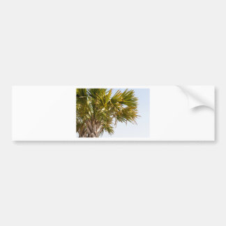 Palm Tree from the East Coast famous Myrtle Beach Bumper Sticker