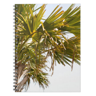 Palm Tree from the East Coast famous Myrtle Beach Notebooks