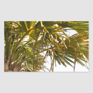 Palm Tree from the East Coast famous Myrtle Beach Rectangular Sticker