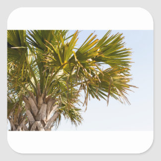 Palm Tree from the East Coast famous Myrtle Beach Square Sticker