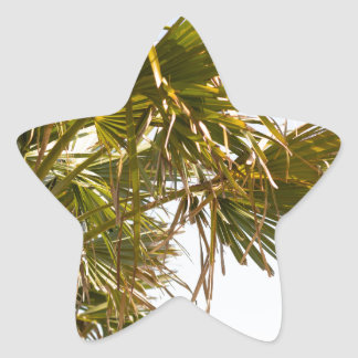 Palm Tree from the East Coast famous Myrtle Beach Star Sticker