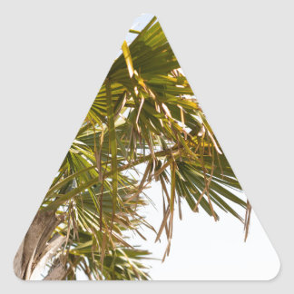 Palm Tree from the East Coast famous Myrtle Beach Triangle Sticker