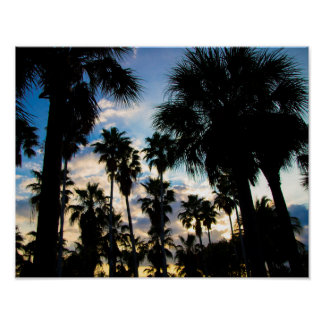 Palm Tree Garden Poster