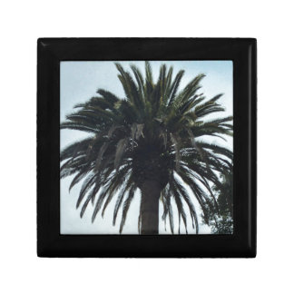 Palm Tree Gift Box