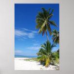 Palm tree, Grand Cayman, Canvas print