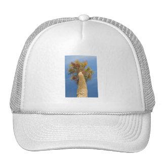 Palm Tree Hats