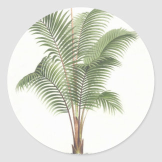 Palm tree illustration collection round sticker