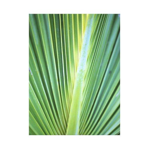 Palm Tree Leaf Canvas Print