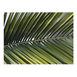 Palm Tree Leaf Postcard