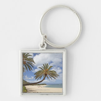 Palm tree leaning out over the sand at Sunset Key Chains