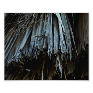 Palm Tree Leaves Photograph