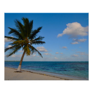 Palm Tree on a Beach Poster